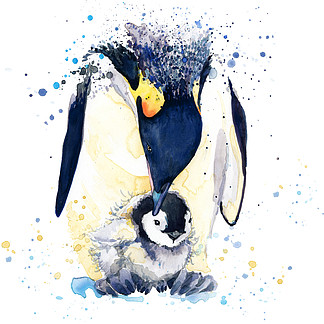 emperor penguin T-shirt graphics. emperor penguin illustration with splash watercolor textured <i>backg</i>